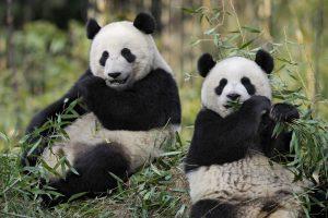 Excursion en Famille au Zoo de Beauval proche du village vacances à La roche Posay