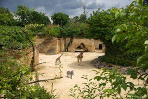 Organiser un séjour à Richelieu proche du zoo et parc animalier proche de Saumur