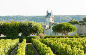 Route des vins Val de Loire