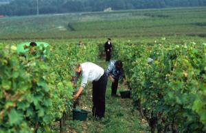 Sur la route des vins proche Richelieu